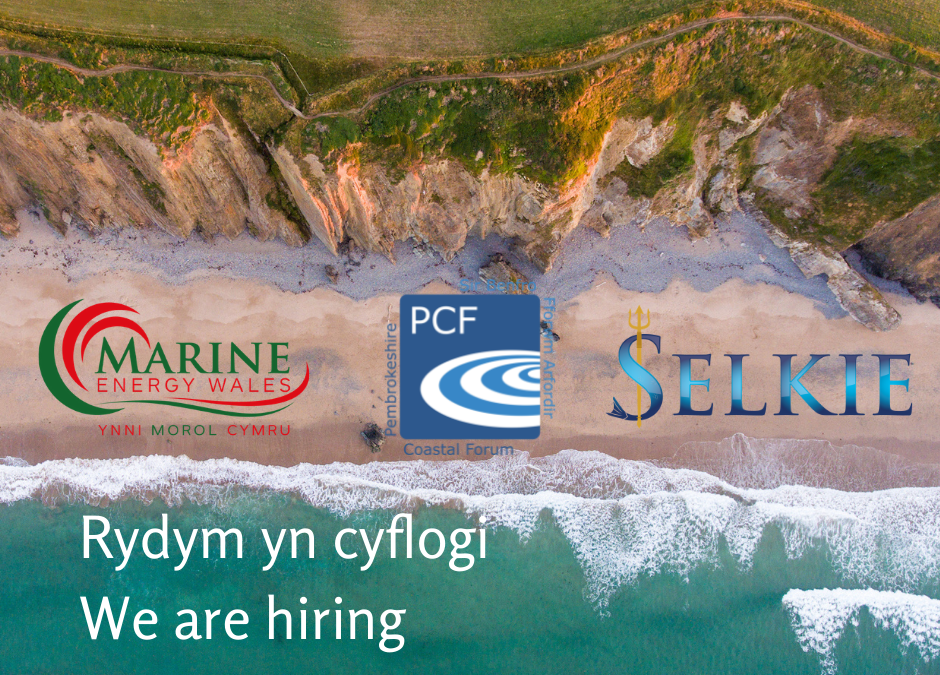 We are hiring  – MEW Project Coordinator SELKIE project (Maternity Cover)